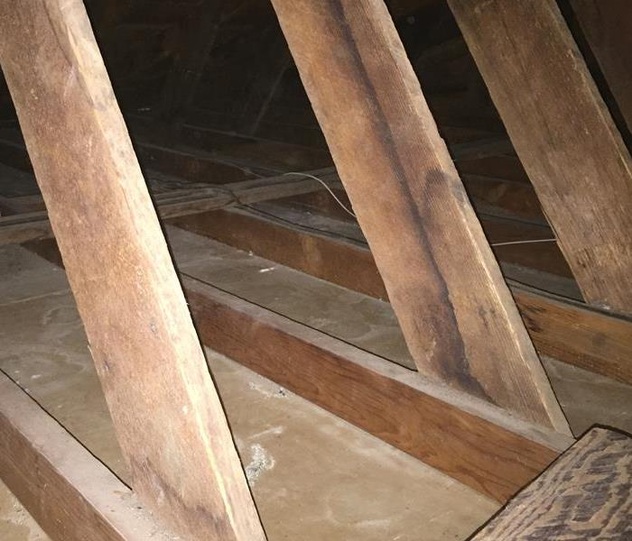 Rat Infested Attic in Lodi, CA After