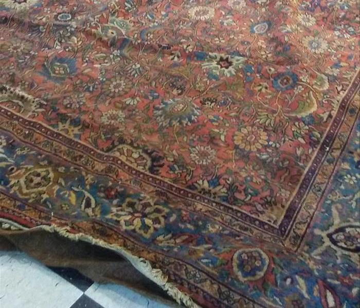 Area Rugs and Mold